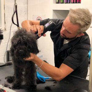 3 everydog snodland dog grooming spa franchise 300x300