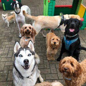 5 everydog snodland day care creche franchise 300x300