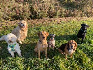 Dog Groups Group 3 300x225