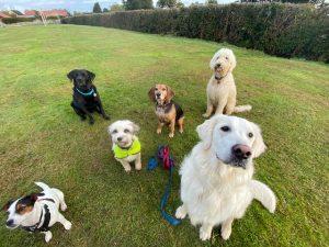 Dog groups a 300x225