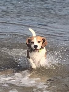 beagle sea 225x300
