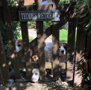 beagles gate copy 300x298