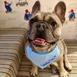 doggroomerw10 300x300