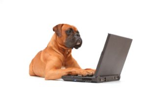 Boxer on computer 300x199
